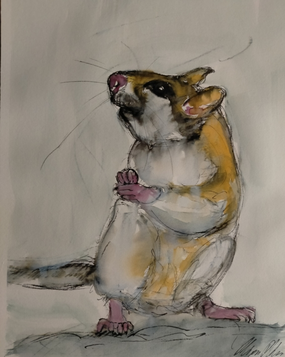 Lirón careto  Dibujo de OliverPlehn-Artist   Compra arte en Flecha.es