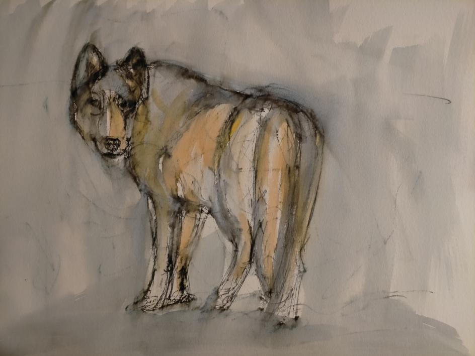 Lobo 3 |Dibujo de OliverPlehn-Artist | Compra arte en Flecha.es
