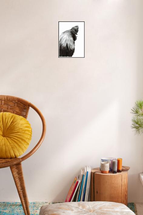 Gallo negro de Indonesia   Dibujo de Macarena Garví   Compra arte en Flecha.es