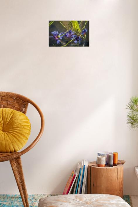 acianos con trigo | Digital de Mercedes Segovia Yuste | Compra arte en Flecha.es