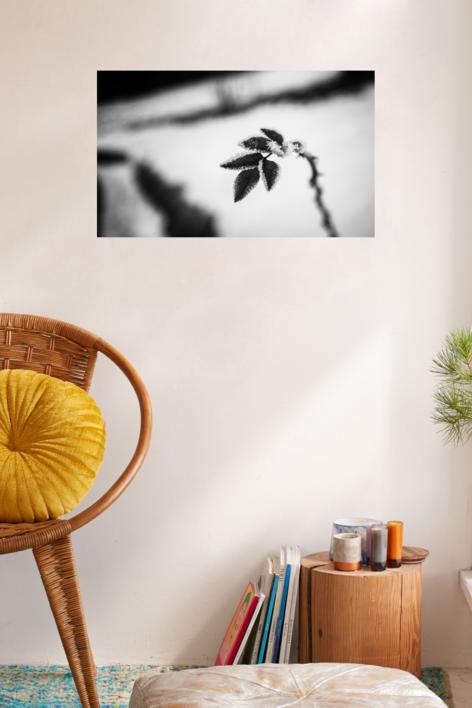 Frío | Fotografía de Iñigo Echenique | Compra arte en Flecha.es