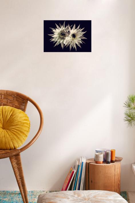 Cactus love | Digital de Eva Ortiz | Compra arte en Flecha.es