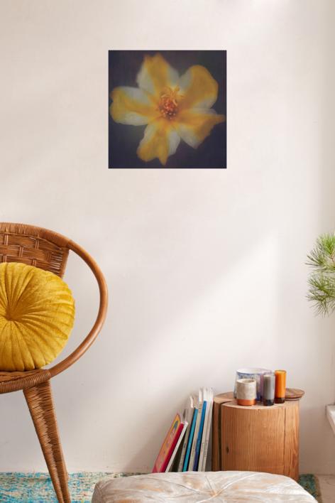 La estrella amarilla | Fotografía de Eva Ortiz | Compra arte en Flecha.es