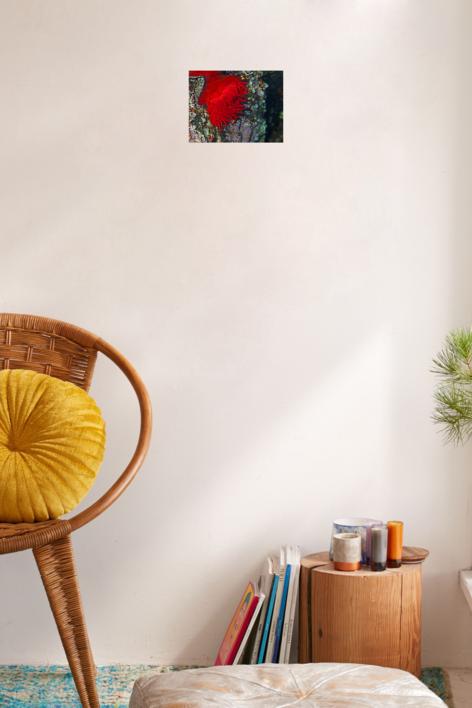 Tomate flamenco | Fotografía de Beatriz García Infante | Compra arte en Flecha.es