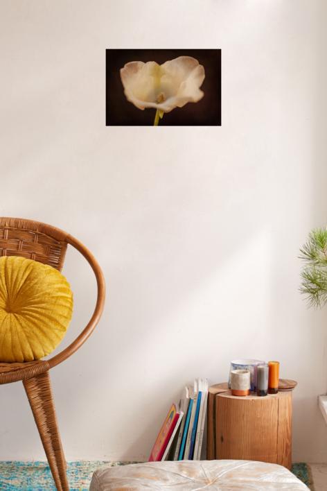 Flower porn | Fotografía de Eva Ortiz | Compra arte en Flecha.es