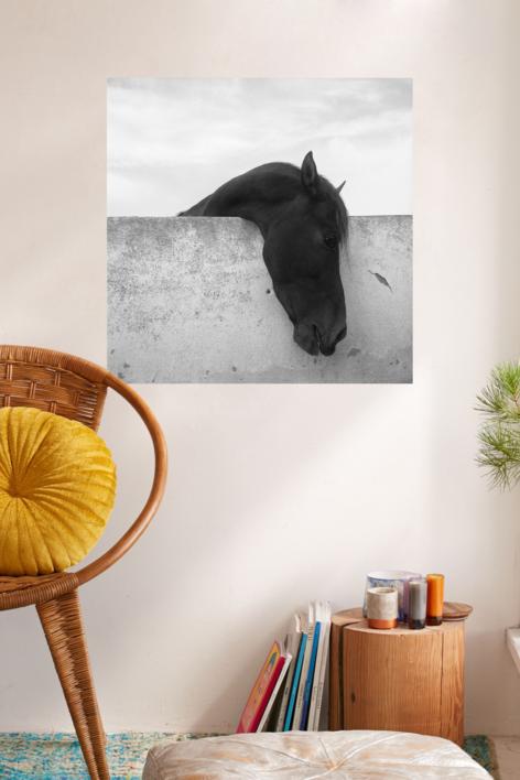 Caballo | Fotografía de Raúl Urbina | Compra arte en Flecha.es