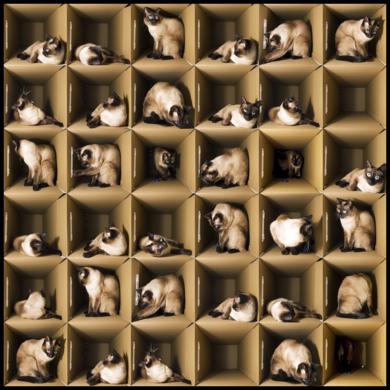La Gatita de Schrödinger|FotografíadeAlicia Moneva| Compra arte en Flecha.es
