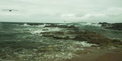GAVIOTAS EN VUELO (de la serie Islas Cies. Foto nº 18)|FotografíadeLuis Arbex| Compra arte en Flecha.es