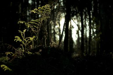 CRECIENDO AL SOL (de la serie Entre Carballos. Foto nº 11)|FotografíadeLuis Arbex| Compra arte en Flecha.es