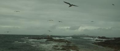 GAVIOTAS EN GRUPO (de la serie Islas Cies. Foto nº 17)|FotografíadeLuis Arbex| Compra arte en Flecha.es