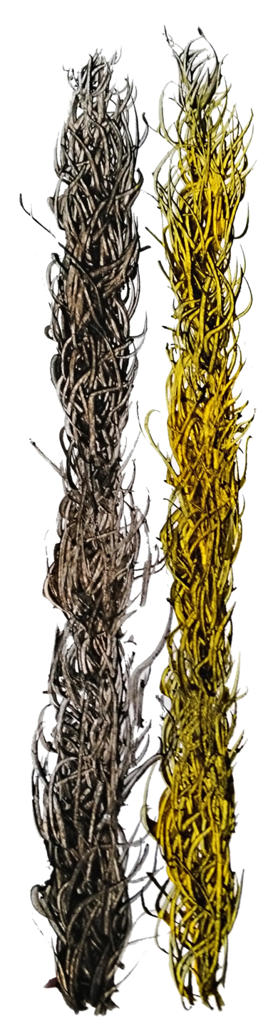 Kelps|DibujodeJorge Regueira| Compra arte en Flecha.es