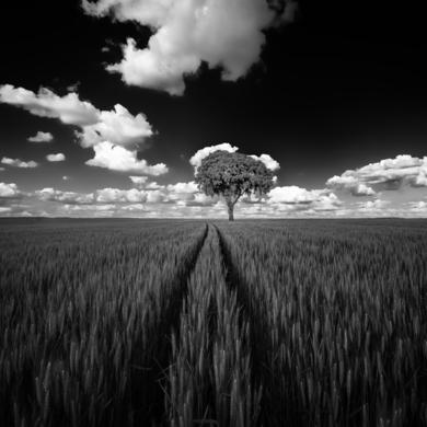Volver|FotografíadeIñigo Echenique| Compra arte en Flecha.es