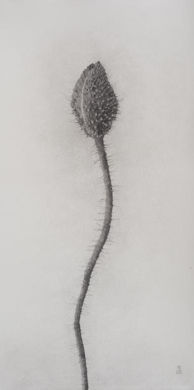 Capullo de amapola|DibujodeMarta de la Sota| Compra arte en Flecha.es