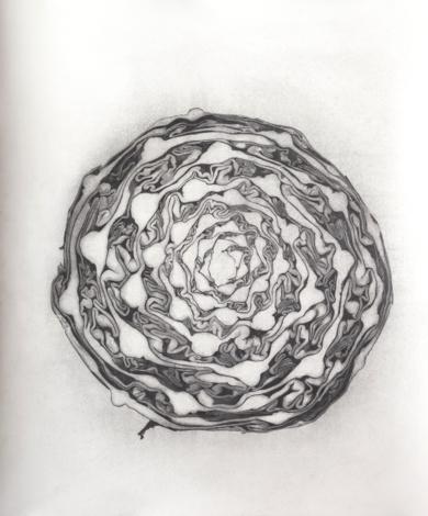 Lombarda, sección horizontal|DibujodeMarta de la Sota| Compra arte en Flecha.es