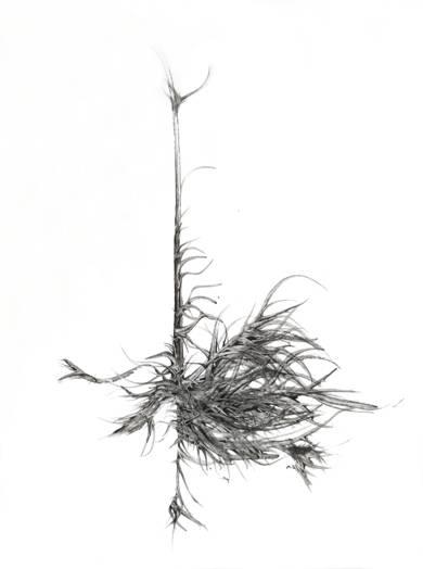Verticalidad|DibujodeJorge Regueira| Compra arte en Flecha.es