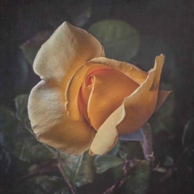 Amarilla|FotografíadeEva Ortiz| Compra arte en Flecha.es