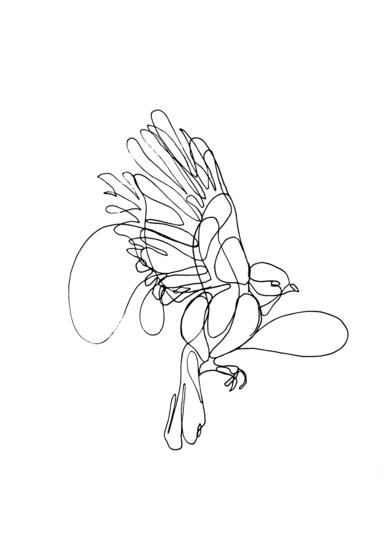 Pájaros II|DibujodeTaquen| Compra arte en Flecha.es