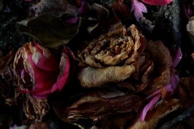 Camelias|DigitaldeJuan de la Sota| Compra arte en Flecha.es