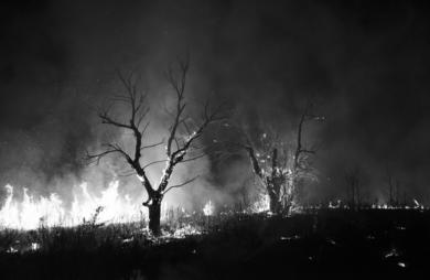 Árbol|FotografíadeSantiago Risueño| Compra arte en Flecha.es