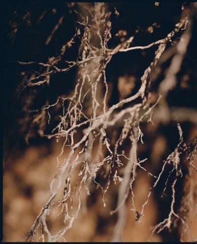 RAÍCES|FotografíadeAna Sting| Compra arte en Flecha.es