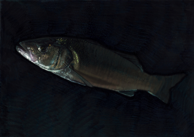 Sea Bass 01 -SOLD- DibujodeCarlos J. Márquez  Compra arte en Flecha.es