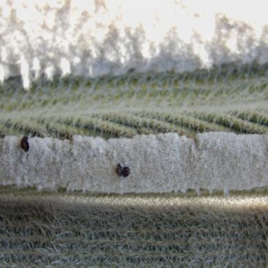 Invierno en los arados|FotografíadeVerónica B. Loring| Compra arte en Flecha.es