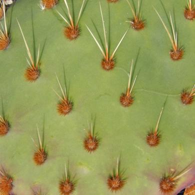 Verde abotonado|FotografíadeVerónica B. Loring| Compra arte en Flecha.es