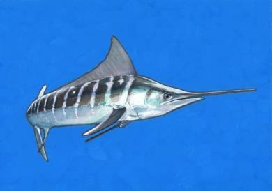 White Marlin 01|DibujodeCarlos J. Márquez| Compra arte en Flecha.es