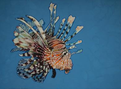 Lionfish 01|DibujodeCarlos J. Márquez| Compra arte en Flecha.es