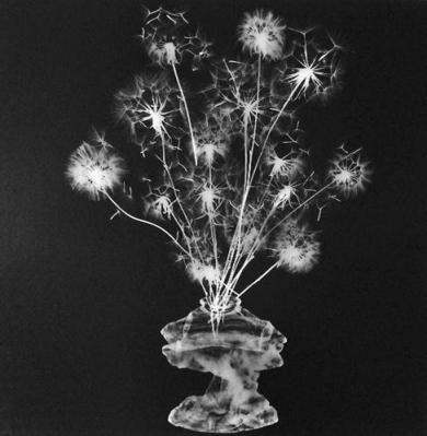 Flores para mi funeral|FotografíadeCasimiro Martinferre| Compra arte en Flecha.es
