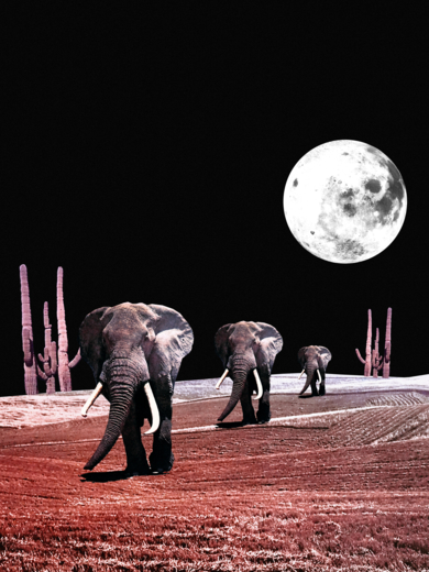 The  Elephants|CollagedeJaume Serra Cantallops| Compra arte en Flecha.es