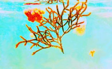 Turquesa 1|DigitaldeMarta Caldas| Compra arte en Flecha.es