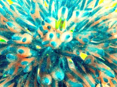 Estallido Azul 1|FotografíadeMarta Caldas| Compra arte en Flecha.es