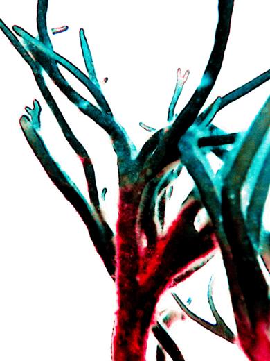 Brío|DigitaldeMarta Caldas| Compra arte en Flecha.es