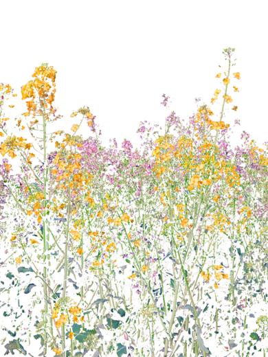 Bloom 2|DigitaldeMarta Caldas| Compra arte en Flecha.es
