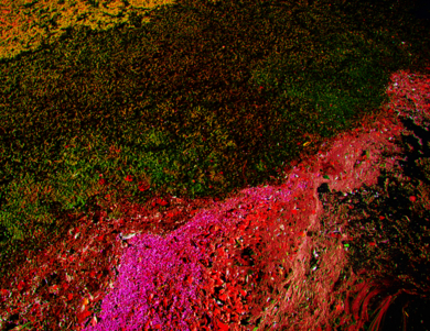 Ecosystem I|FotografíadeViet Ha Tran| Compra arte en Flecha.es