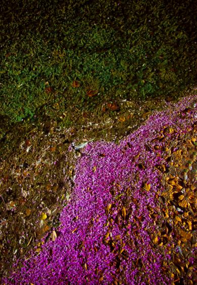 Ecosystem X|FotografíadeViet Ha Tran| Compra arte en Flecha.es