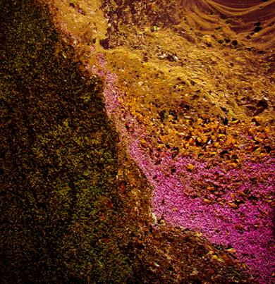 Ecosystem III|FotografíadeViet Ha Tran| Compra arte en Flecha.es
