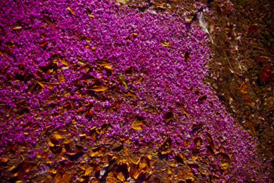 Ecosystem V|FotografíadeViet Ha Tran| Compra arte en Flecha.es