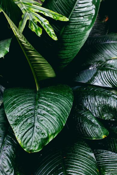 Tropical I|DigitaldeDaniel Comeche| Compra arte en Flecha.es