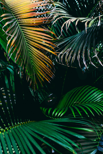 Subtropical I|DigitaldeDaniel Comeche| Compra arte en Flecha.es