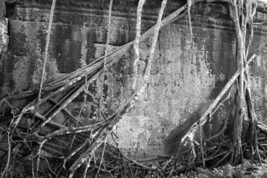 Ta Phrom|FotografíadeVerónica Velasco Barthel| Compra arte en Flecha.es