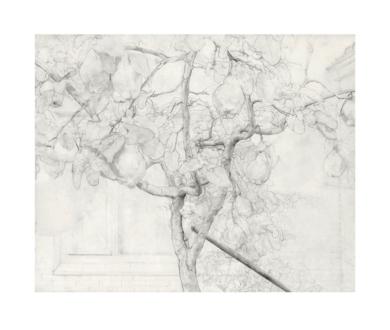 Membrillero|Obra gráficadeAntonio López| Compra arte en Flecha.es