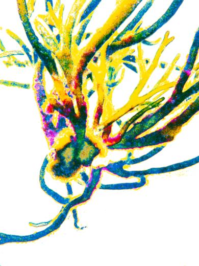 Energía.|DigitaldeMarta Caldas| Compra arte en Flecha.es