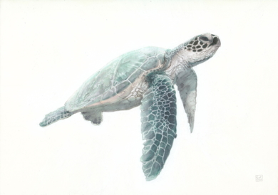 Green Sea Turtle 02 -SOLD-|DibujodeCarlos J. Márquez| Compra arte en Flecha.es