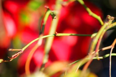 Naturaleza abstracta|FotografíadeEnrique Pazos| Compra arte en Flecha.es
