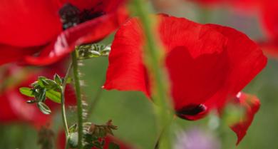 El campo se tiñe de rojo|FotografíadeEnrique Pazos| Compra arte en Flecha.es