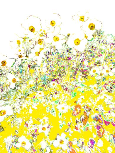 Inflorescencia 1|FotografíadeMarta Caldas| Compra arte en Flecha.es
