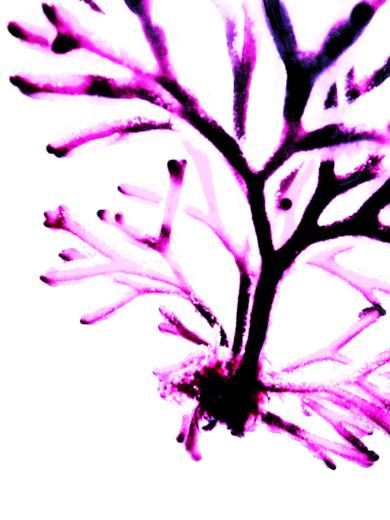 Ocle Magenta|DigitaldeMarta Caldas| Compra arte en Flecha.es