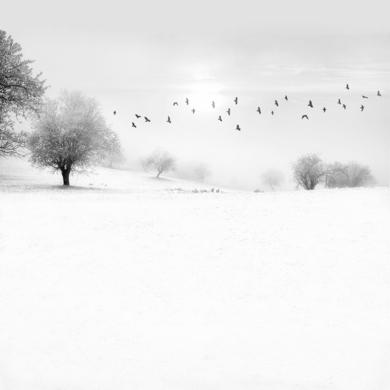 Snowscape  11|FotografíadeAndy Sotiriou| Compra arte en Flecha.es